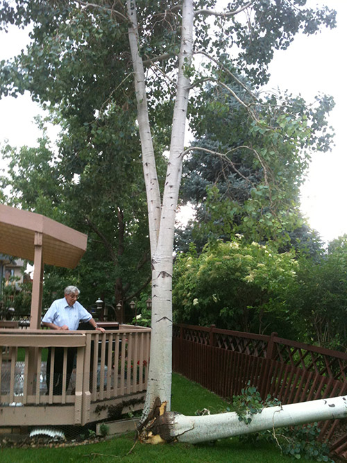 https://tlctreeexpert.com/wp-content/uploads/2021/05/boulder-seasonal-tree-care.jpg