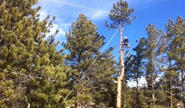Rocky Mountain National Park hires TLC Tree Expert Inc. (A Boulder Tree Service)