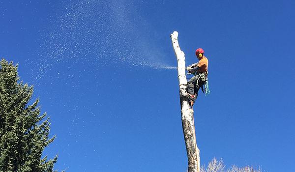 TLC Tree Expert Volunteers at Uni Hill Elementary